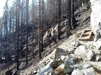 Stair on Natural Arch Trail in Santiam State Forest after 2020 wildfires.